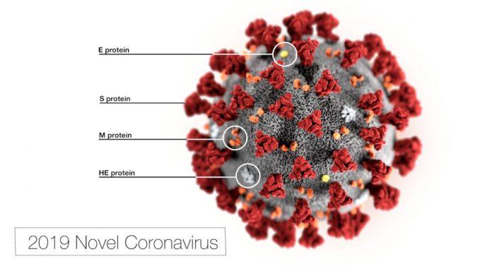 coronavirus covid anticorpo proteine spike