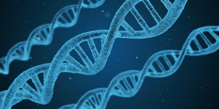 distrofia invecchiamento cellulare sarcopenia