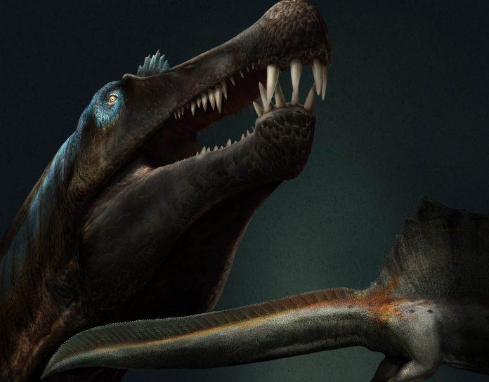 spinosauro dinosauri acquatici coda rettili marini