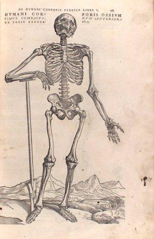 ossa scheletri vesalio