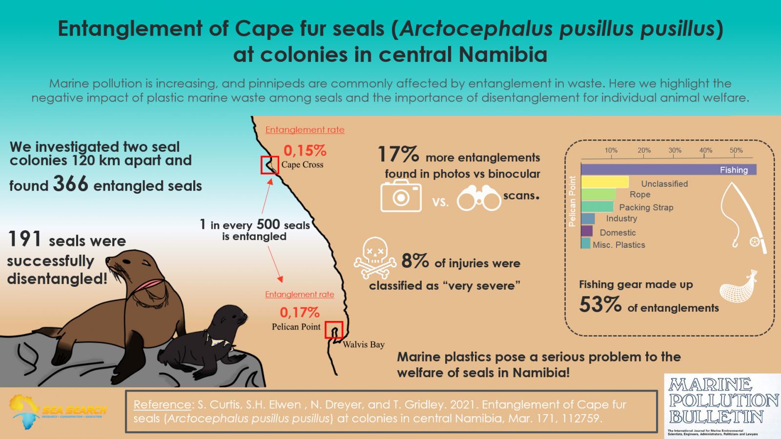 otarie orsine del capo Namibia Arctocephalus pusillus pusillus