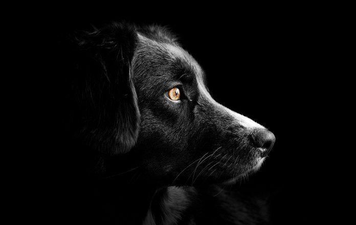 giornata internazionale cane aggressività