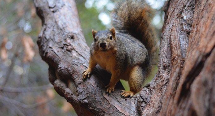 scoiattolo parkour acrobazia