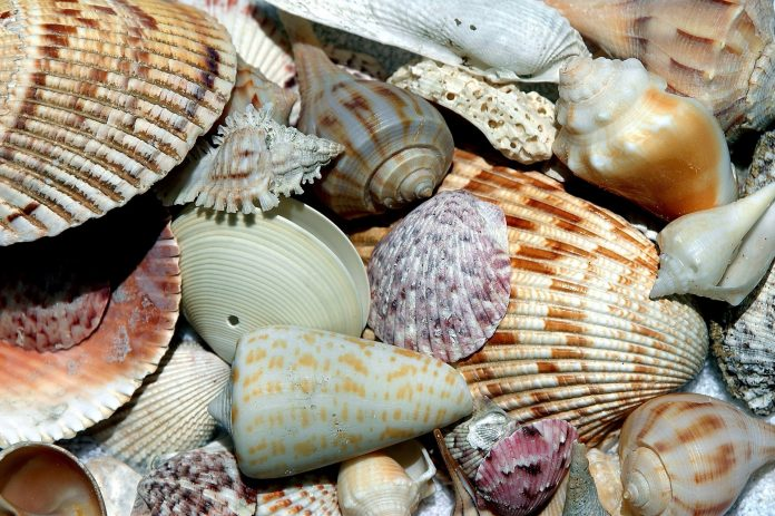 formazione conchiglie molluschi shell