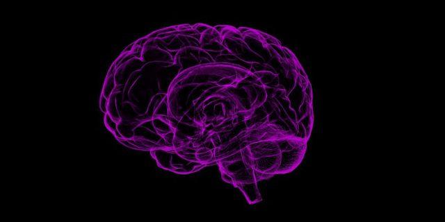 attività del cervello